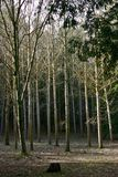 Bosje van Bomen Stock Foto's