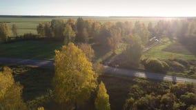 Bosje van de satellietbeeld het gele berk in de nevel van het de herfstzonlicht stock videobeelden