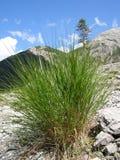 Bosje van gras op berghelling Stock Fotografie