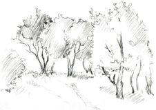 Bosje van loofbomen stock illustratie