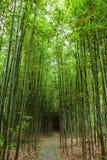 Bosjes van bamboe Stock Foto's
