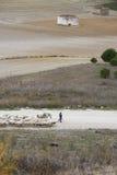 boskap Fotografering för Bildbyråer