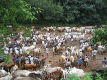 boskapsmarknad arkivfoton