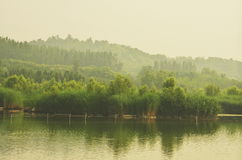 Bosket im Nebel Lizenzfreies Stockfoto