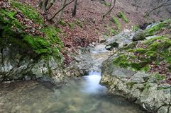 Boskreekwatervallen Stock Foto's