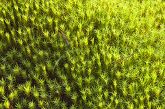Achtergrond van boskruiden. Stock Afbeelding