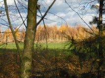 Boslandschap in de herfst stock afbeelding