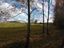 Boslandschap in de herfst stock foto's
