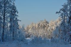 Boslandschap in de de winter ijzige zonnige dag stock foto