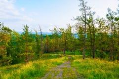 Boslandschap met bomen, berghellingen en meer onder zachte de zomermening van de zonsondergang lichte zonsondergang royalty-vrije stock afbeelding