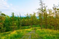 Boslandschap met bomen die op de berghellingen onder de zachte aard van de zonsondergang lichte, bosberg groeien stock foto's