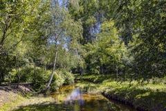Boslandschap met de rivier Stock Fotografie