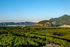 Boslandschap met heuvel op de achtergrond, dichtbij Vila Panamer Stock Afbeeldingen