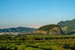 Boslandschap met landschap op de achtergrond, dichtbij Vila Pan Royalty-vrije Stock Foto