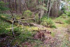 Boslandschap op de lente Stock Foto's
