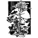 Boslandschap, pijnboom Royalty-vrije Stock Fotografie