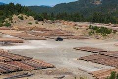 Boslandschap van houten die logboeken van pijnboomhout in het bos, in een stapel in het Nationale park van Pindus worden gestapel royalty-vrije stock afbeelding