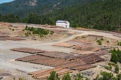 Boslandschap van houten die logboeken van pijnboomhout in het bos, in een stapel in het Nationale park van Pindus worden gestapel stock afbeelding