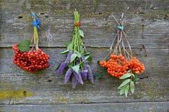 Boslijsterbes en viburnumbes en anijsplant hyssop royalty-vrije stock afbeelding
