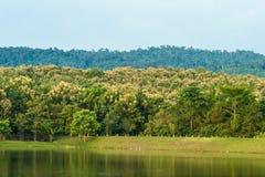Bosmeer die op bomen in Thailand wijzen Stock Foto