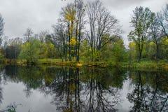 Bosmeer op een bewolkte de herfstdag stock fotografie