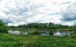 Bosmoeras De hemel van wolken Groen landschap Kleurrijke Bomen Stock Afbeelding