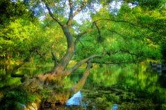 Bosna河的春天 图库摄影