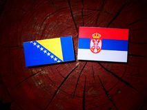 Bosnia and Herzegovina flag with Serbian flag on a tree stump is. Olated royalty free stock photography