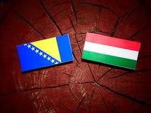 Bosnien och Hercegovina flagga med den ungerska flaggan på en trädstubbe Royaltyfri Fotografi