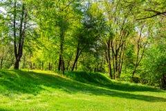 Bosopen plek in schaduw van de bomen Stock Foto