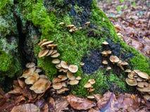Bospaddestoelen op de boomstam van een boom stock foto's