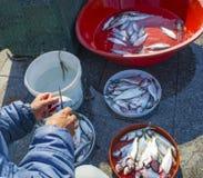 Bosphorus de Istambul, vara de pesca com a caça dos peixes Foto de Stock