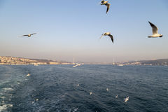 The Bosphorus, Istanbul Royalty Free Stock Images