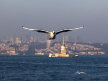 The Bosphorus, Istanbul Stock Photo