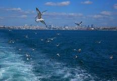 Bosphorus, Istanbul z seagulls obrazy stock