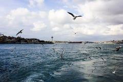 Bosporus Istambul Imagens de Stock Royalty Free