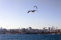 Bosporus Istanbul Stockfotos