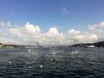 Bosporus-Meer und die Seemöwen lizenzfreies stockfoto