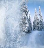 Bosque ártico en invierno fotos de archivo