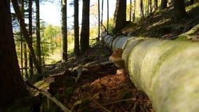 Bosque épico de la montaña almacen de metraje de vídeo