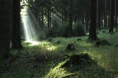 Bosque \ 1 Fotos de archivo