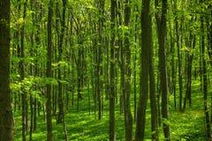 Bosque 1 del resorte Fotografía de archivo