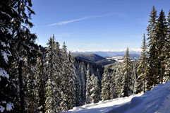 Bosque 1 Nevado Foto de archivo libre de regalías