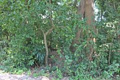 bosque fotografia de stock