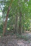bosque imagens de stock