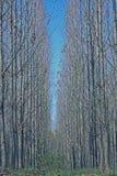 Bosque. Fotos de archivo