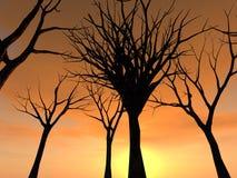 Bosque 21 Imágenes de archivo libres de regalías