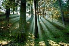 Bosque Fotos de archivo libres de regalías