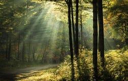 Bosque Imagen de archivo