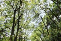 bosque imagem de stock royalty free